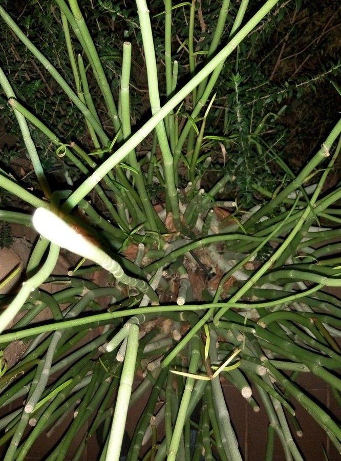 farm9.staticflickr.com_8663_16508441310_dc227c61f6_h.