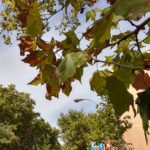Fotos-Motorola-One-Action-HDR-1-150x150.jpg