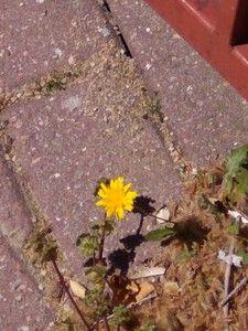 fotos.subefotos.com_323428b89412db9e6abdda9455e15793o.