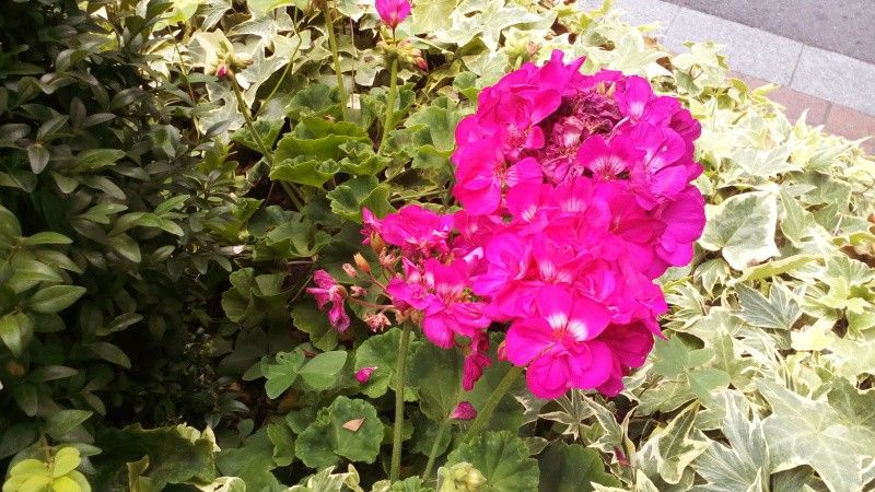 i60.tinypic.com_2yzbj2t.