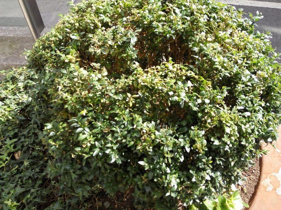 i61.tinypic.com_fcs85x.