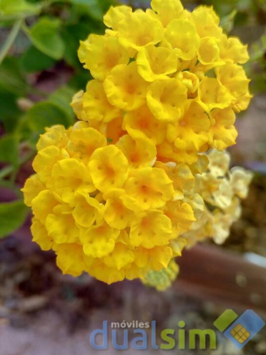 images.tapatalk_cdn.com_15_09_05_37e3eaf9a3940fac36e0e7836d76d015.