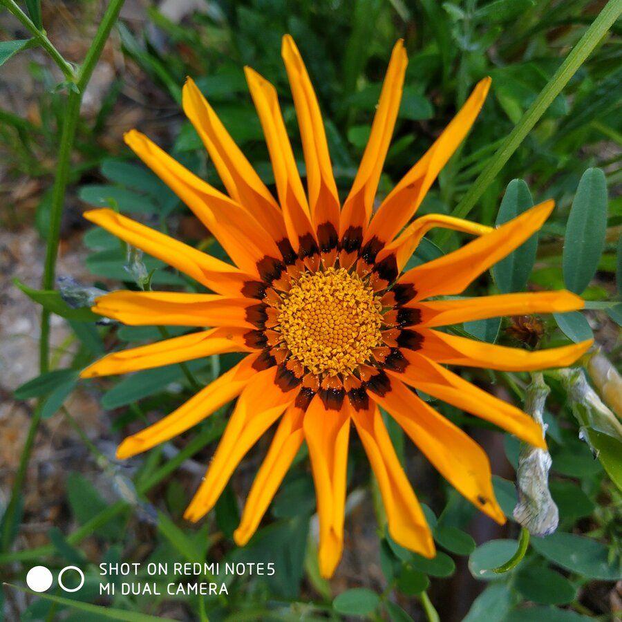 Muestra tus  fotos hechas con nuestro Redmi Note 5 img_20180516_143326-jpg.359025