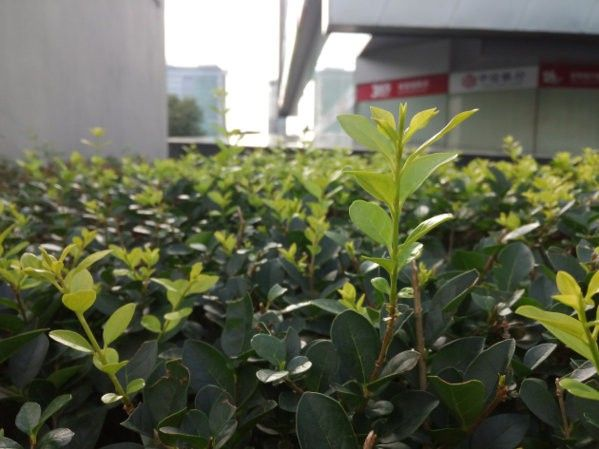 Qiku-Youth-phone-camera-photo-sample-GSM-INSIDER-4.