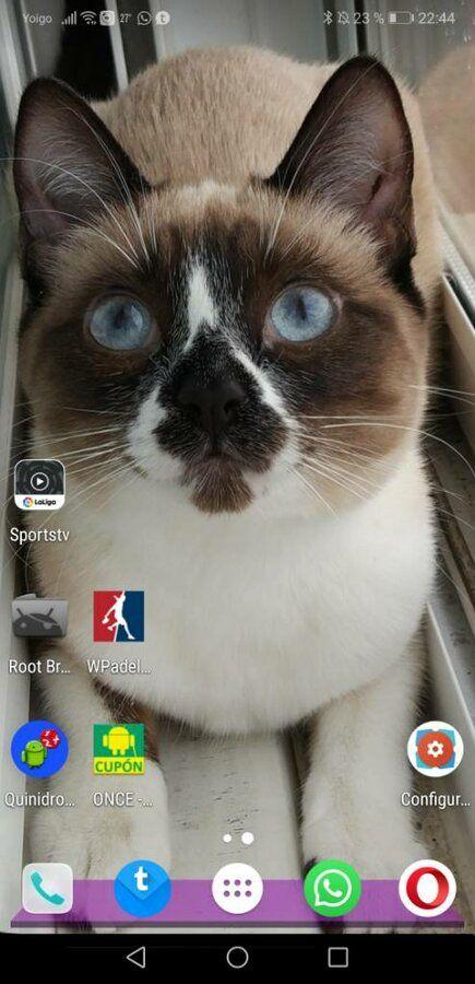Screenshot_20190530_224447_com.teslacoilsw.launcher.jpeg