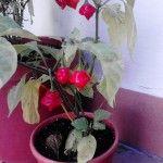 taliandroid.com_wp_content_uploads_2012_12_IMG_20121202_111139_150x150.