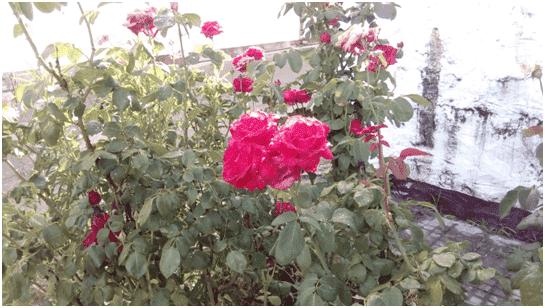 upload_2015-6-15_16-31-37.