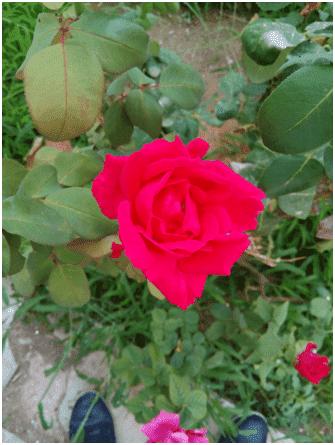 upload_2015-8-31_15-32-11.